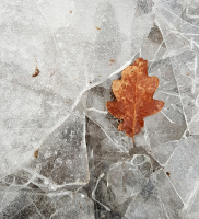 Frost-lag på lag