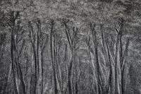 Jura skog