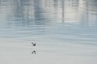 Antatt - Alene på havet