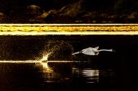 Antatt - Take-off