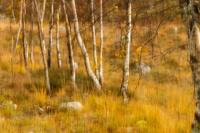 3. plass okt 2018 - Høst i skogen