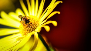 3.plass - Blomster og bier