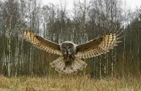 HO, Natur - Inn for landing