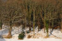 Skoginteriør