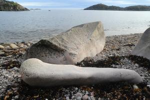 Dinosaurknokkel på stranda