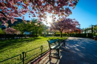 Antatt: Bergen blomstrer