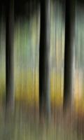 Antatt: Gyllent  øyeblikk i høstskogen.