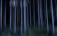 Panorert skog