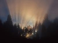 Antatt - Naturens magiske spotlight