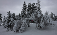 Hytta i vinterskogen