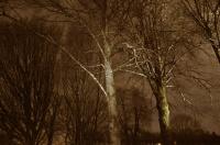 Uværsglimt i skogen