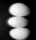 Antatt - Eggene