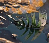 Antatt - Seilas i forurenset farvann