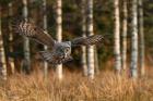 Hederlig omtale, natur - Ved bjørkeskogen