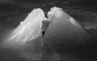 Antatt, Digital monokrom - Draugen i vinterdrakt