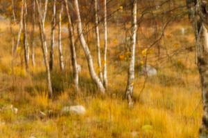 Høst i skogen