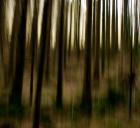 Min skog er borte