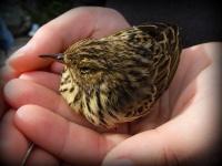 Antatt - En fugl i hånden er bedre enn ti på taket..