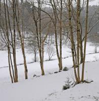 Lett snøvær