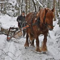 Hederlig omtale - Tradisjonsdrift med hest