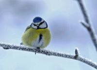 Antatt, Natur - På ett ben i minus femten