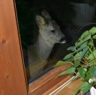 Kan jeg komme inn ?