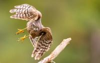Sparrowhawk VM-20th FIAP Nature Biennial 2020