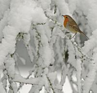 Hederlig omtale - Kald vinterdag i skogen