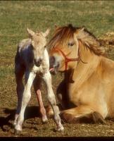 1. plass - En stolt mor med sin nyfødte fole
